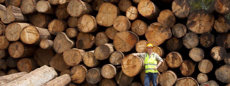 Responsiblewood_logs