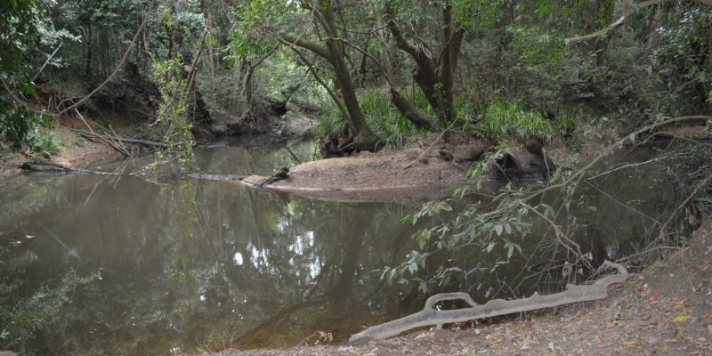 Riparian-rainforest-along-Tinana-Creek-min