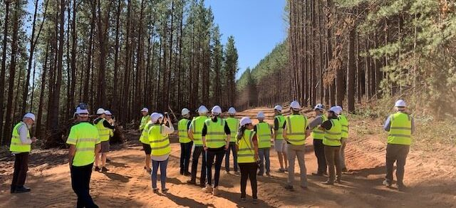 Sustainable wood will 'build back better'